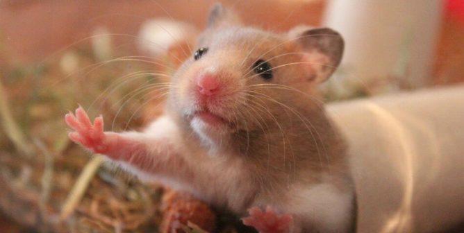 Fatos a serem observados sobre animais de estimação
